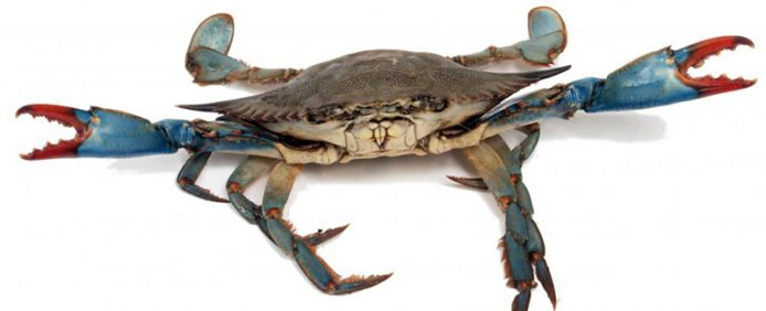 Does Your Consultant Business Have Crabs…?